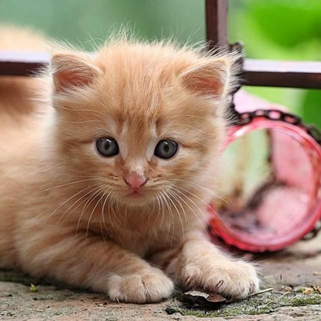 İslam'da kedinin yeri
