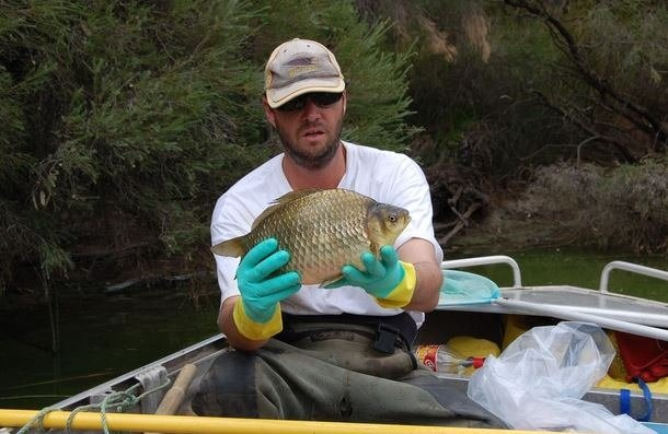 Japon balığını nehirde yaşar mı?