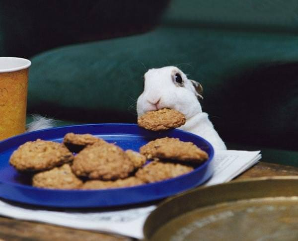 Yemeğe gizli misafir çıkarsa...