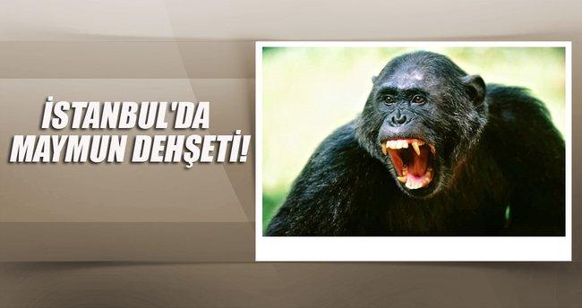 İstanbul'da parkta maymun dehşeti!