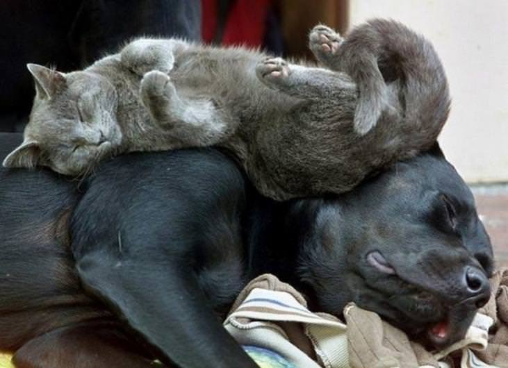 Orada burada uyuyakalan sevimli kediler