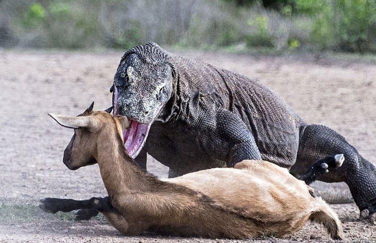 Vahşi doğadan gerçekler