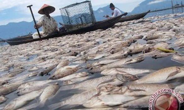 Ölü balıklar korkuttu
