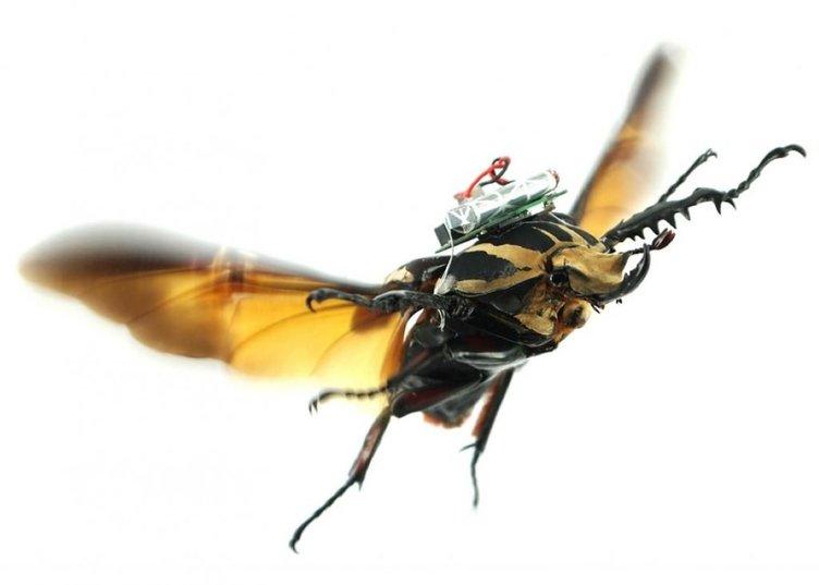 Silahlı kuvvetlere 'böcek İHA'lar geliyor  .