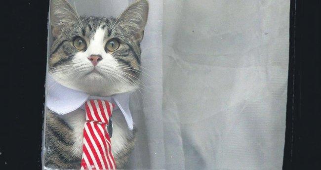 Sorguda kedisi de kravatlı