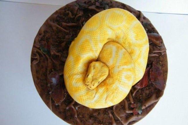Bunları görünce pastadan soğuyacaksınız!