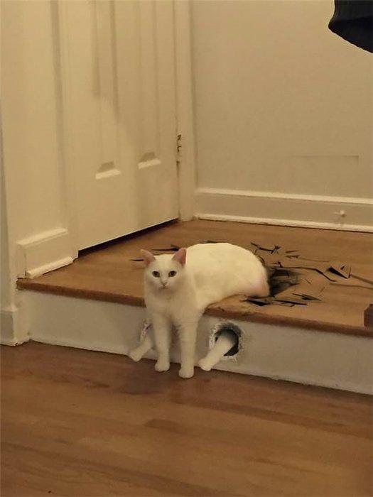 Yeni fenomen yarım kediler!