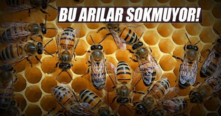 Mülayim Arılar!