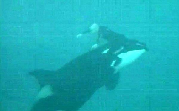 Havuzda katil balina dehşeti