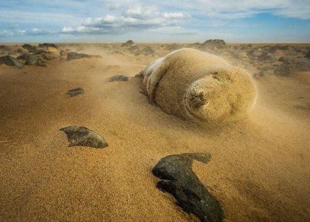 Yılın Doğa Fotoğrafçısı'ndan en iyi kareler