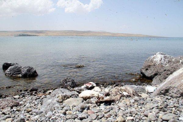 Adır Adası'nda kuş ölümleri