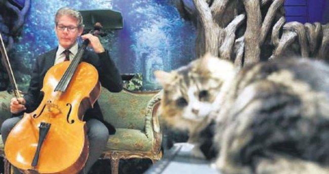 Kediler için müzik albümü