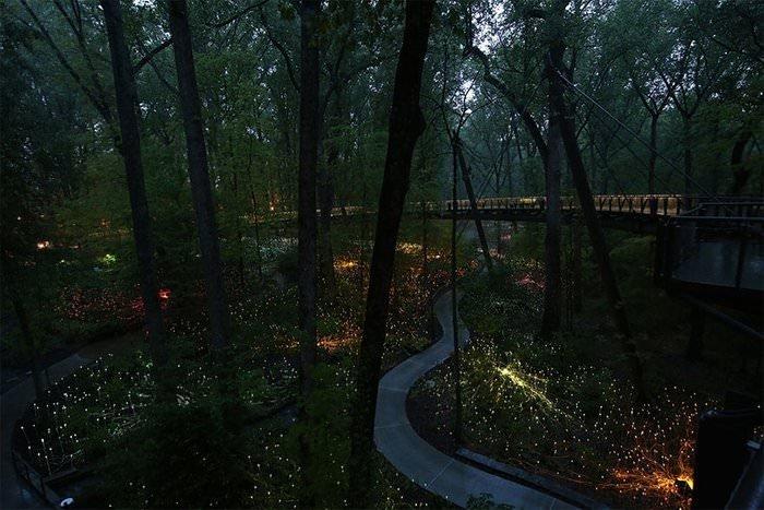 Atlanta Botanik Bahçesi, ABD