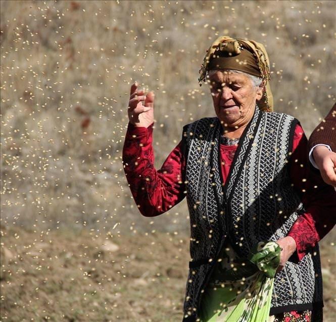 Köylüler ekiyor, yaban hayvanları hasat ediyor