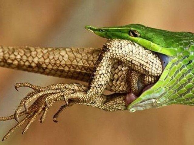 Vahşi doğadan etkileyici yaşam mücadeleleri