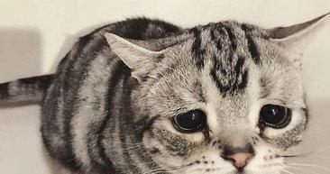 Dünya'nın en üzgün kedisi Luhu