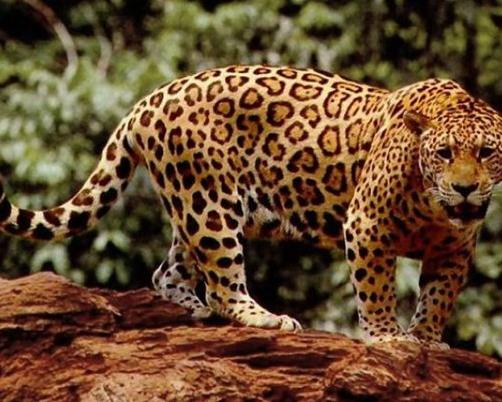 Dünyanın en tehlikeli hayvanları