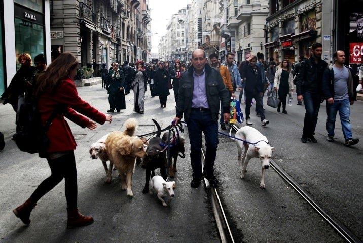 Mesleğini özleyince köpek gezdiriciliğine başladı