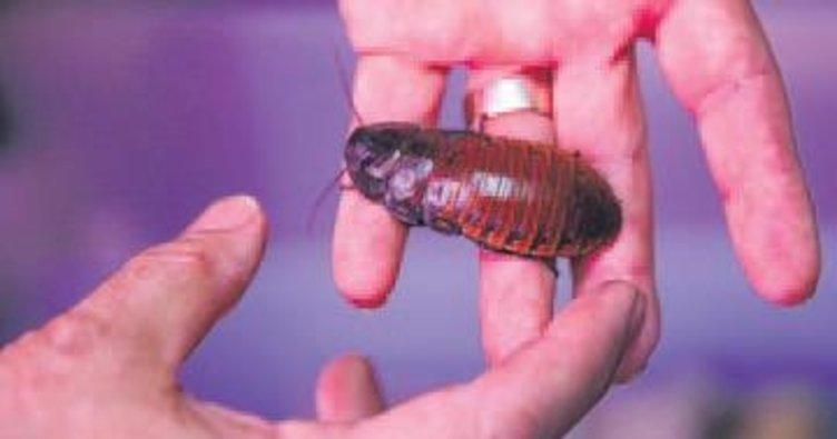 Hamam böceğini 4 liradan satıyor