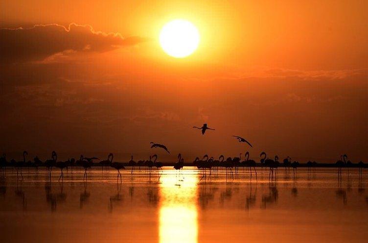 Tuz Gölü'nde binlerce flamingo yavrusu kuluçkadan çıktı