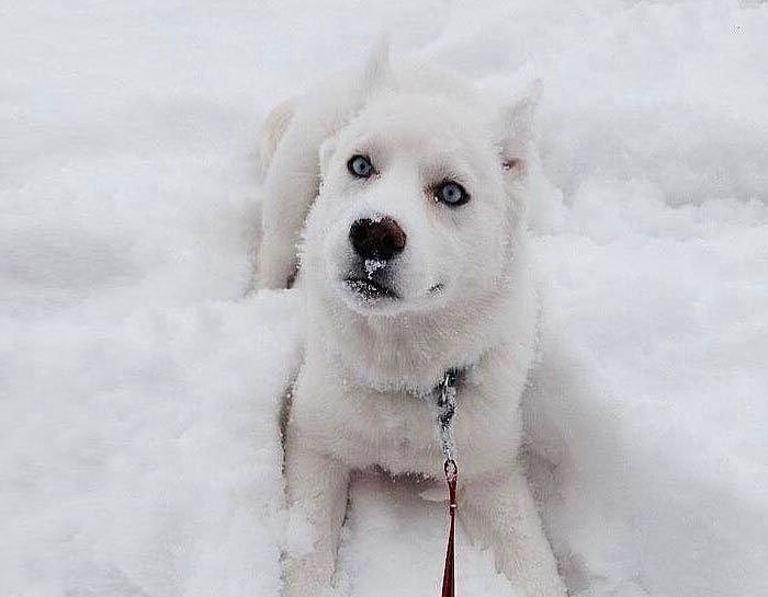 Karla ilk kez tanışmış 25 sevimli hayvan