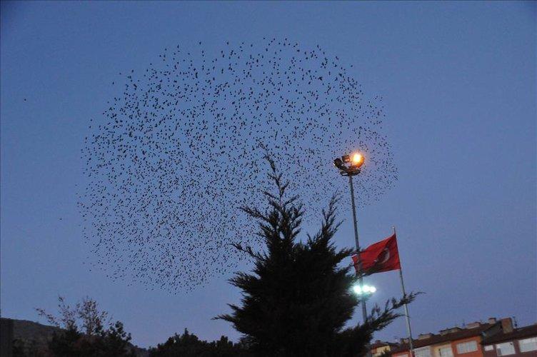 Sığırcıkların gökyüzündeki dansı