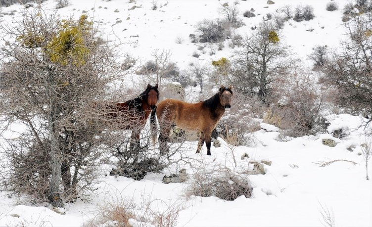 Murat Dağı'nın yılkı atları