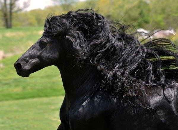 Dünyanın en güzel atı