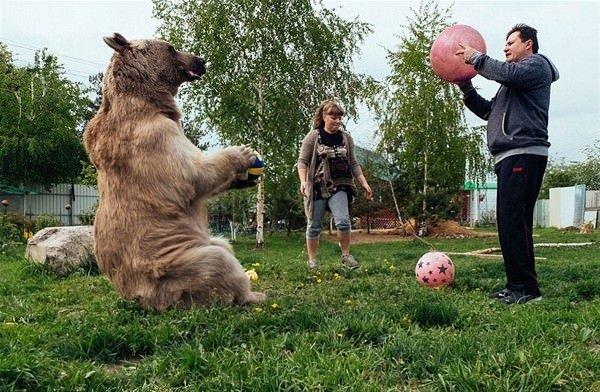 Evcilleştirilmiş ayıyla beraber yaşıyorlar
