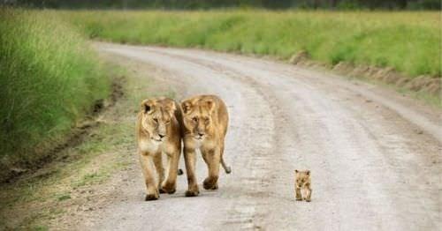 Hayvanlar ve sevimli yavruları