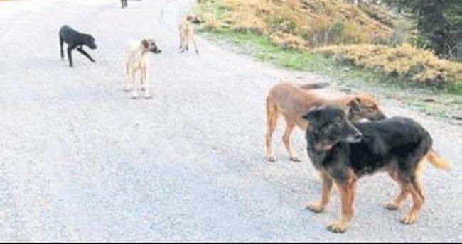 Köpekleri yola bırakıp gittiler