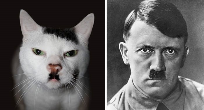 Kedilerin taklit yetenekleri