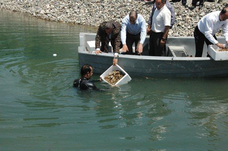 Binlerce kerevit Fırat Nehri'ne bırakıldı