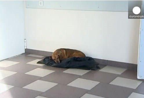 Bir köpeğin inanılmaz hikayesi
