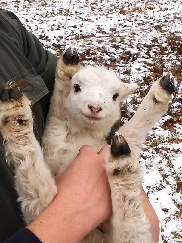 Hayvanların sevimli halleri