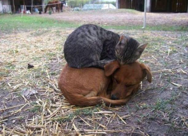 Köpeklerin yerini işgal eden kediler