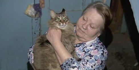 Hayat kurtaran kahraman kedi