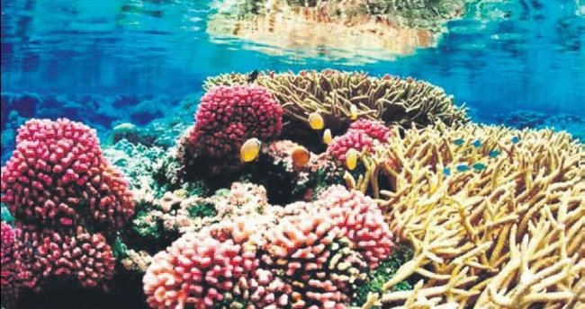 Karayipler'deki mercanlar 3D yazıcıyla korunacak