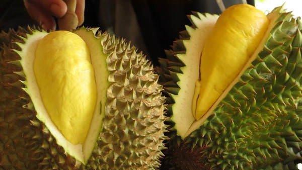 Meyvelerin kralı: Durian
