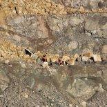 Siirt'teki maden ocağı faciasıyla ilgili 4 kişi tutuklandı