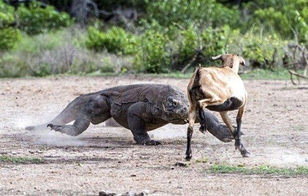 Hayvanlar dünyasından korkunç saldırılar