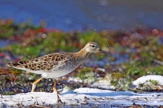 Kuş cenneti, Dünya Mirası Listesi'ne girmeye hazırlanıyor