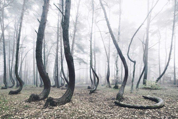 Sıradışı ormanlar