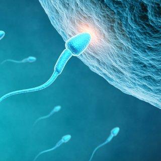 Sperm hareketinde azalma görülmesi ne anlama gelir?