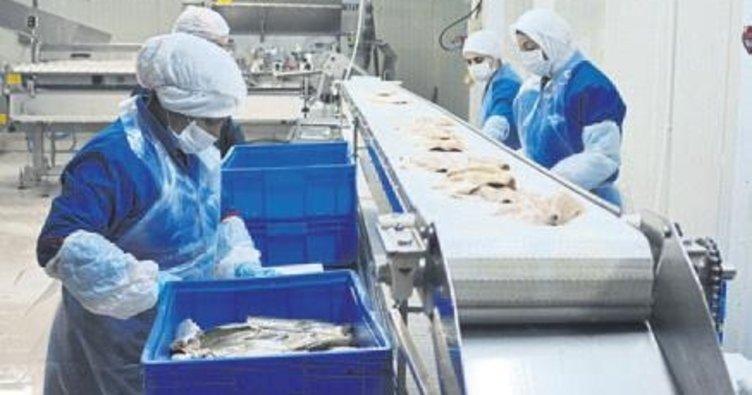 Rusya'ya 500 ton balık ihracatı