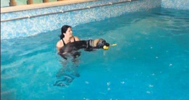 Belçika'da köpeklere özel yüzme havuzu