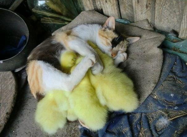 Birlikte uyuyan sevimli canlılar