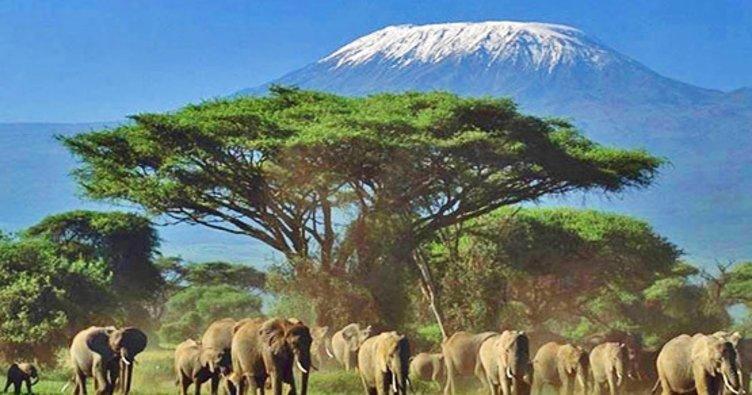 Kenya'da şarbon hastalığı