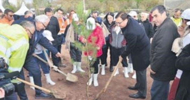 3. Köprü'ye 5 milyon ağaç dikilecek