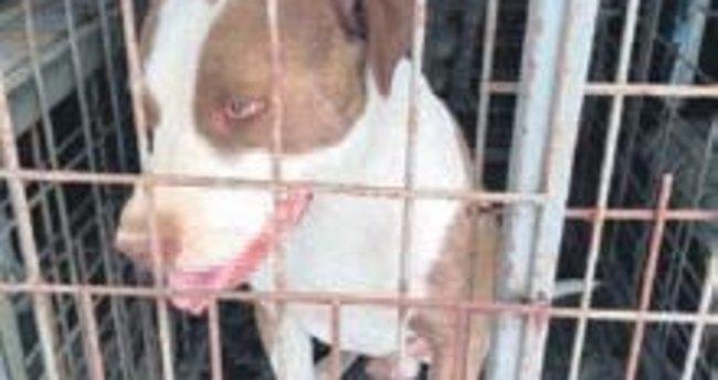 Tehlikeli köpek cezası: 16 bin TL